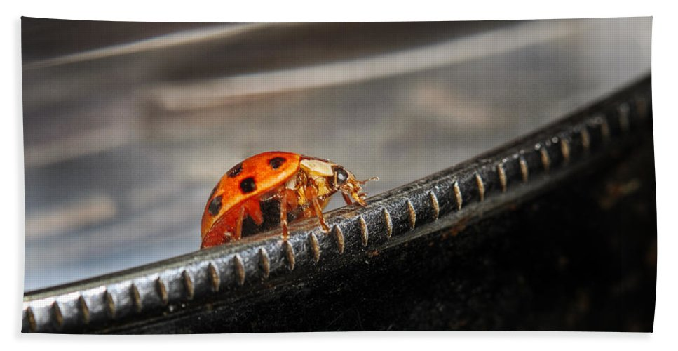 Ladybug Hand Towel featuring the photograph Walking On Edge by Susan Capuano