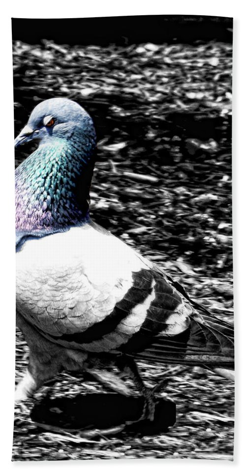 Pigeon Hand Towel featuring the photograph Walking Pretty by Kristie Bonnewell