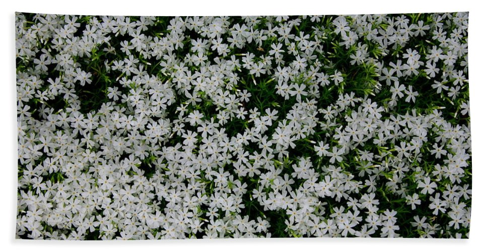 Landscape Hand Towel featuring the photograph Wallflowers 2 by Gary Emilio Cavalieri