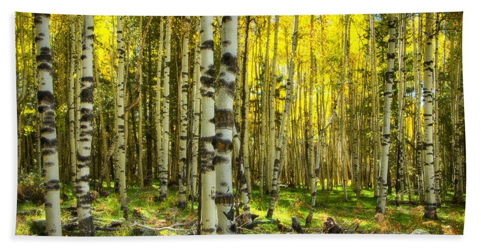 Fall Colors Bath Sheet featuring the photograph Wandering In The Woods by Saija Lehtonen