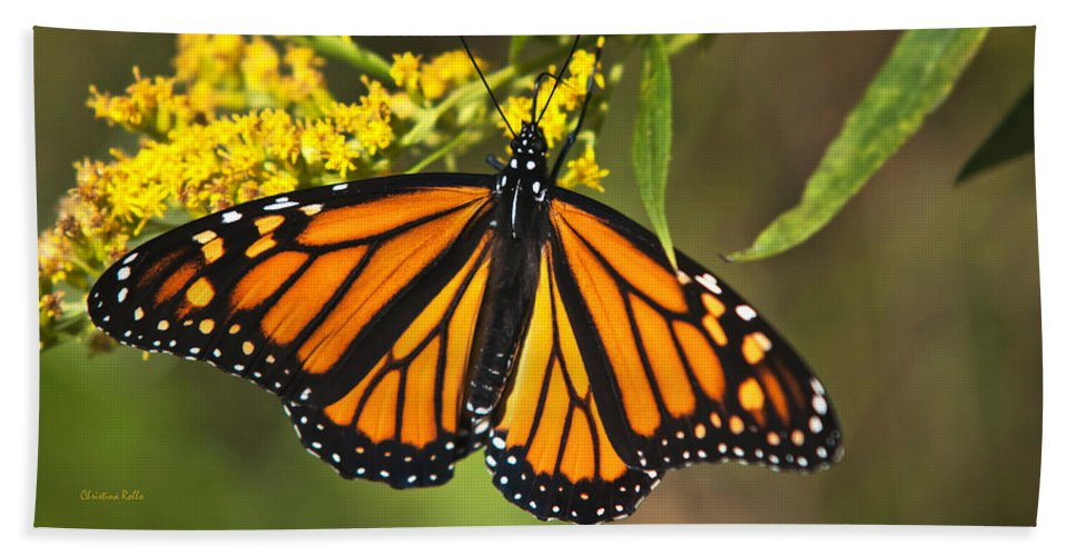 Monarch Butterfly Bath Sheet featuring the photograph Wandering Migrant Butterfly by Christina Rollo