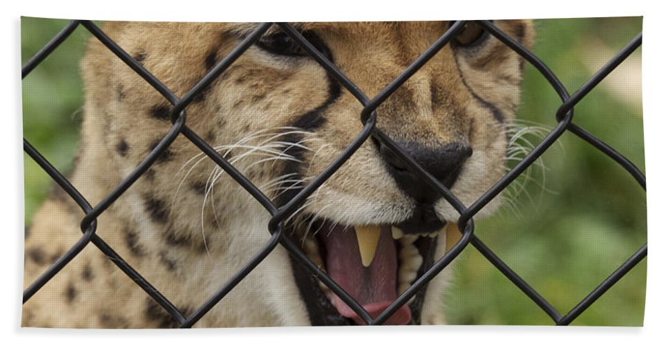 Animal Hand Towel featuring the photograph Wanting Freedom by The Artist Project
