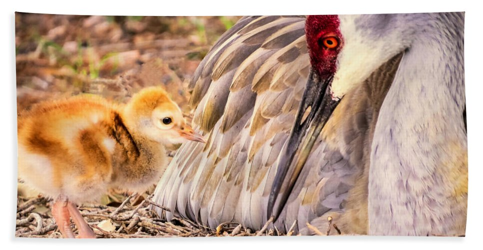 Sandhill Crane Hand Towel featuring the photograph Wants Attention by Zina Stromberg