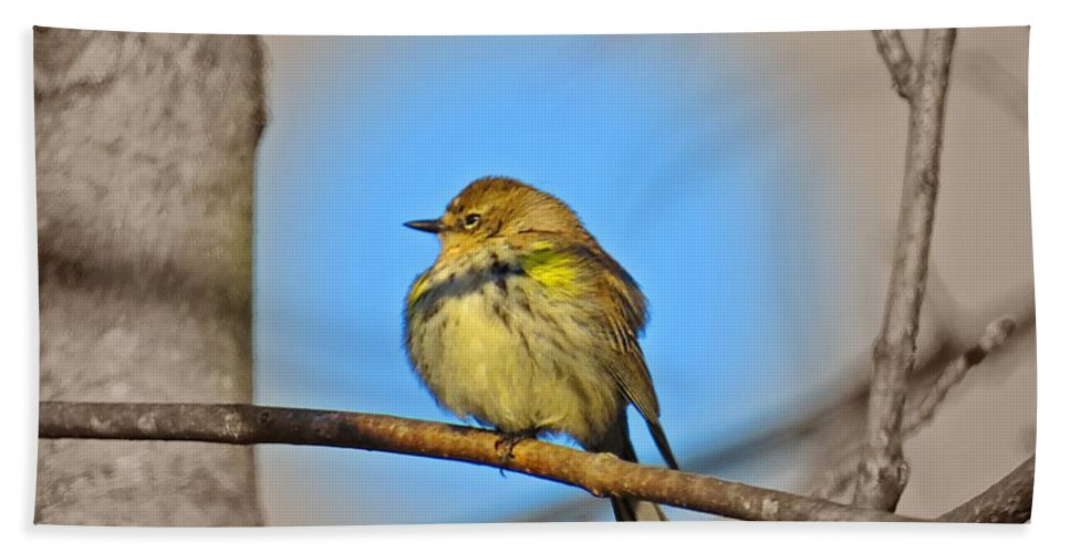Female Myrtle Warbler Hand Towel featuring the photograph Warbler by MTBobbins Photography