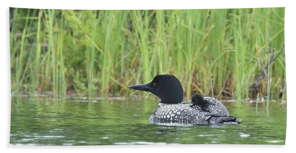 Common Loon Bath Sheet featuring the photograph Warm And Cozy by Teresa McGill