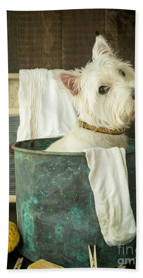 Dog Bath Towel featuring the photograph Wash Day by Edward Fielding