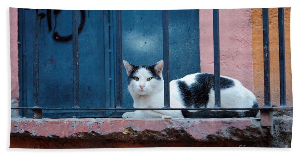 Travel Hand Towel featuring the photograph Watchful Cat, Mexico by John Shaw