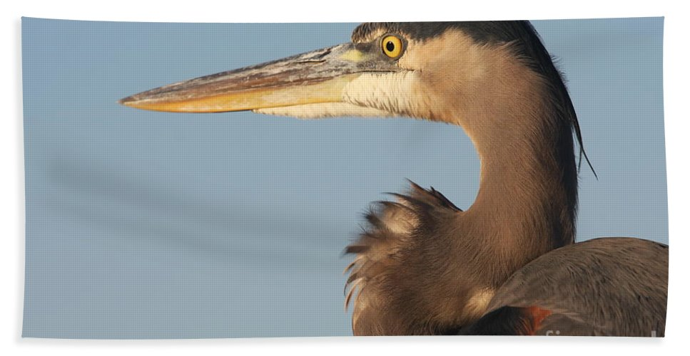 Heron Hand Towel featuring the photograph Watchful Heron by Christiane Schulze Art And Photography