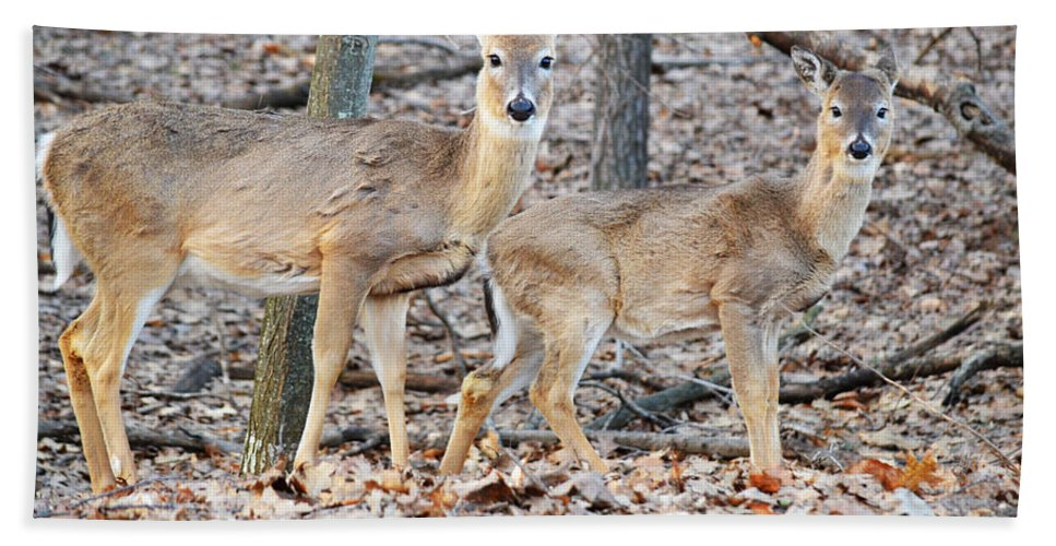 Whitetail Hand Towel featuring the photograph Watchful by Linda Kerkau