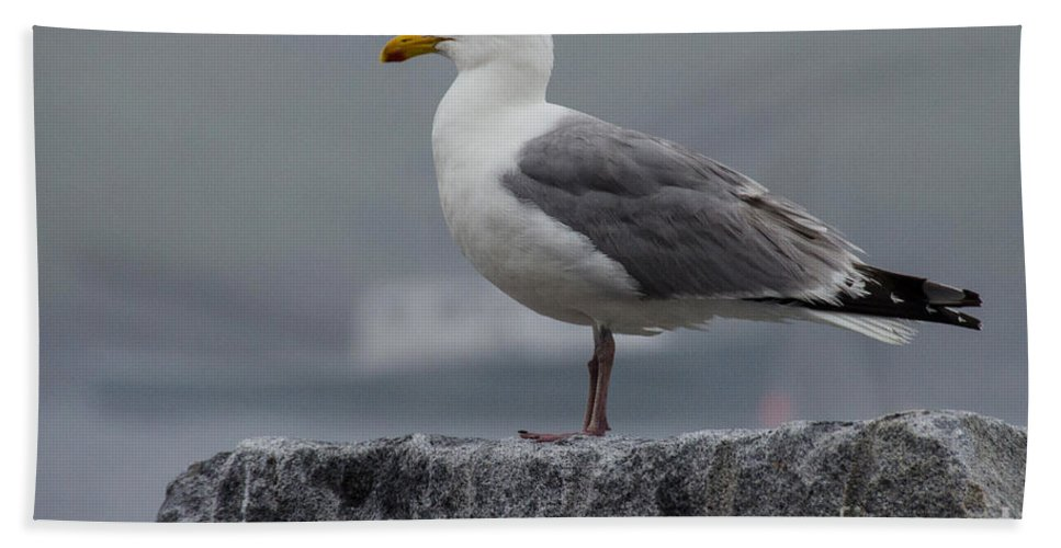 Seagull Hand Towel featuring the photograph Watchful Seagull by Pat Lucas