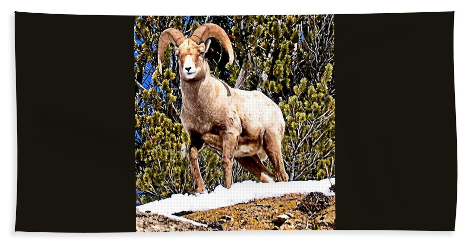 Hoback Junction Hand Towel featuring the photograph Watching The Valley by Image Takers Photography LLC - Laura Morgan