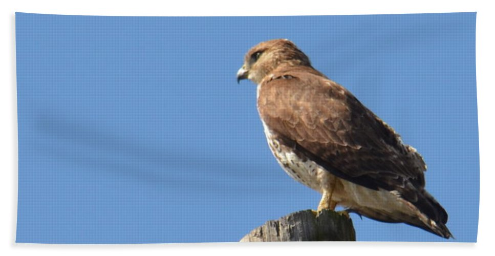Watchtower-hawk Hand Towel featuring the photograph Watchtower-hawk by Maria Urso