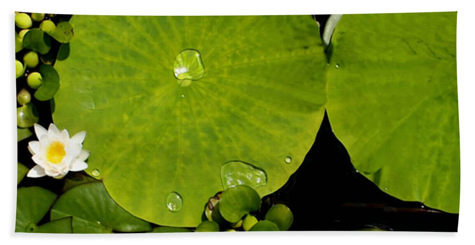 Lily Pad Photograph Hand Towel featuring the photograph Water Drops Bristol Rhode Island by Tom Prendergast