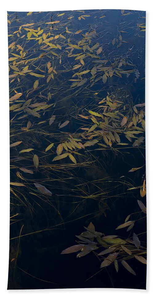 Leaves Bath Sheet featuring the photograph Water Leaves by Gary Eason