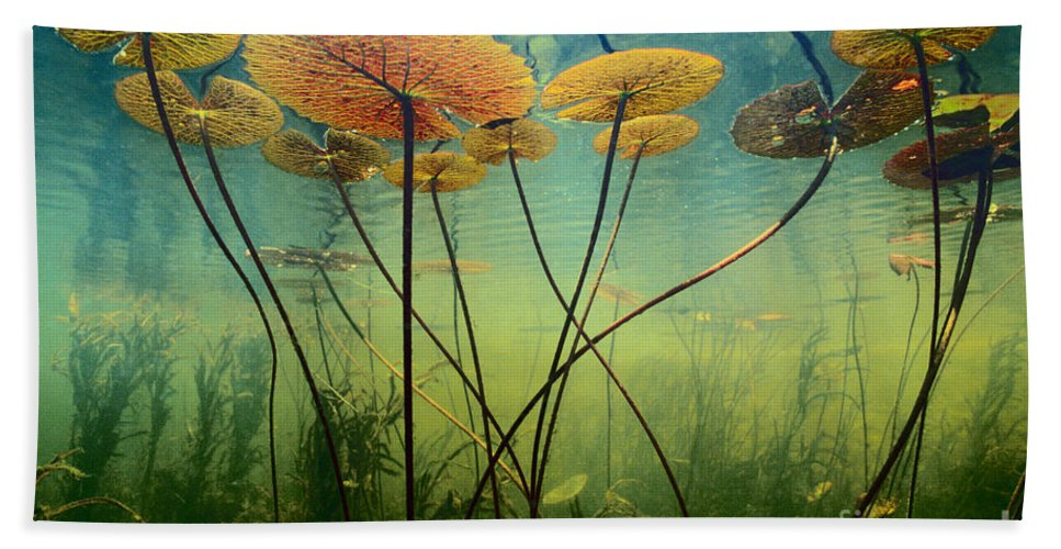Flora Color Hand Towel featuring the photograph Water Lilies by Frans Lanting MINT Images