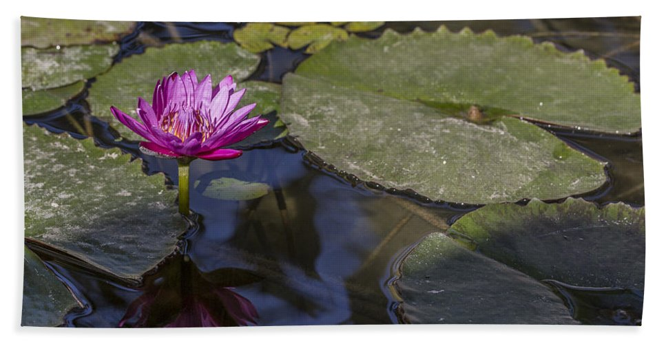 Water Lily Hand Towel featuring the photograph Water Lily 1 by Scott Campbell
