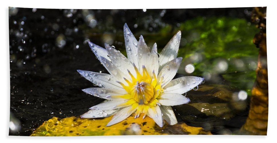 Water Lily Bath Sheet featuring the photograph Water Lily 1 by Scott Carruthers