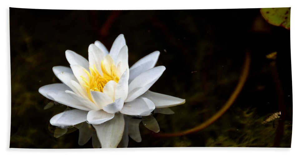 Lily Hand Towel featuring the photograph Water Lily by Cheryl Baxter