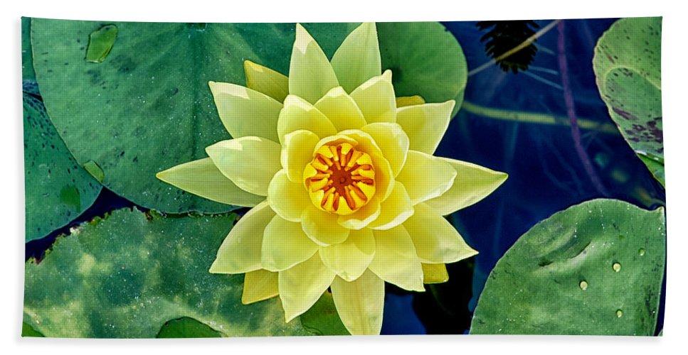 Hardy Bath Sheet featuring the photograph Yellow Water Lily by Fabrizio Troiani