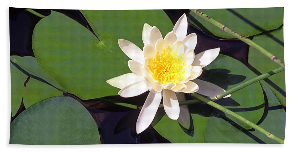 Lilies Hand Towel featuring the photograph Water Lily I I I by Jim Smith