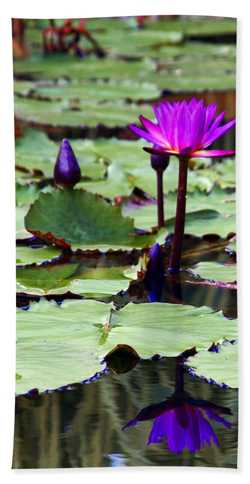 Water Lily Bath Sheet featuring the photograph Water Lily by John Dauer