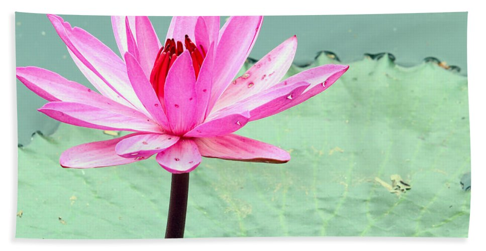 Outdoor Bath Sheet featuring the photograph Water Lily by Paul Fell