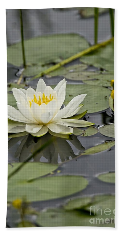 Water Lily Bath Sheet featuring the photograph Water Lily Pictures 45 by World Wildlife Photography