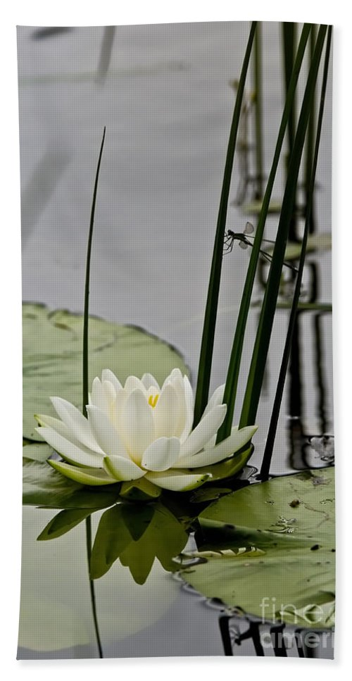 Water Lily Bath Sheet featuring the photograph Water Lily Pictures 48 by World Wildlife Photography