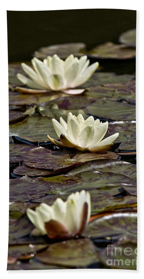 Water Lily Bath Sheet featuring the photograph Water Lily Pictures 64 by World Wildlife Photography
