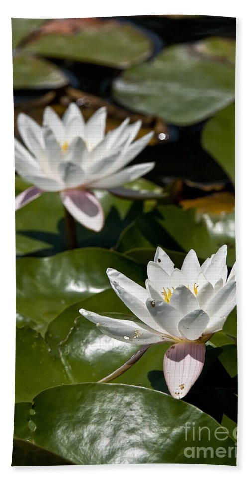 Water Lily Bath Sheet featuring the photograph Water Lily Pictures 75 by World Wildlife Photography