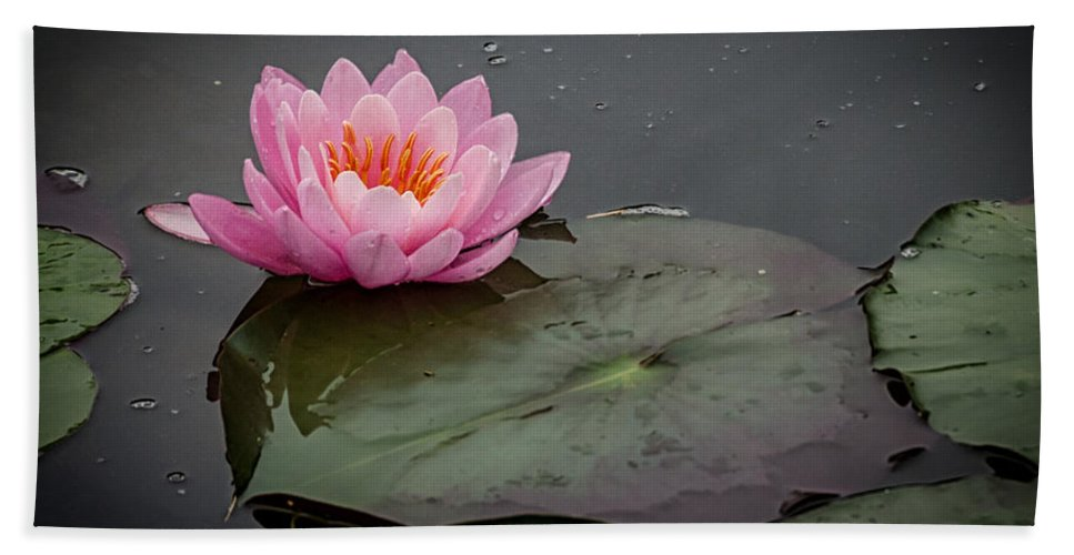 Pink Hand Towel featuring the photograph Waterlily by Pat Lucas