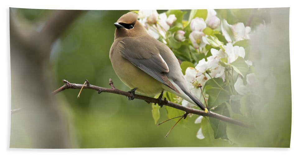 Cedar Waxwing Hand Towel featuring the photograph Waxwing In A Dream by Penny Meyers