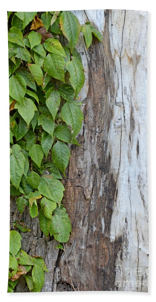 Tree Hand Towel featuring the photograph Weathered Tree Trunk With Vines by Debbie Portwood