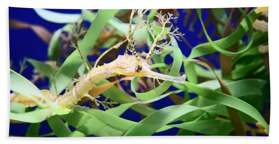 Weedy Sea Dragon Bath Towel featuring the photograph Weedy Sea Dragon by Ellen Henneke