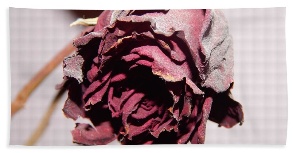 Flower Bath Sheet featuring the photograph Weeping Rose by FL collection