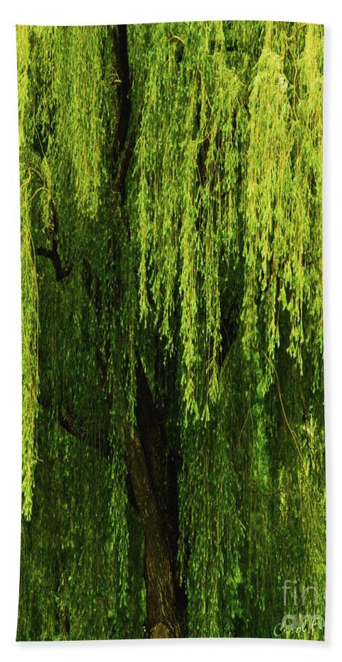 Weeping Willow Bath Sheet featuring the photograph Weeping Willow Tree Enchantment by Carol F Austin