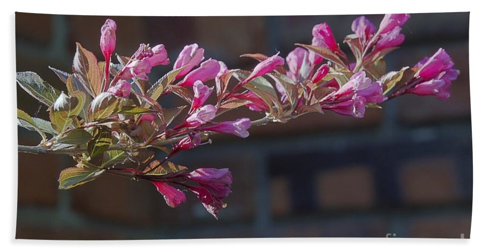 Environment Hand Towel featuring the photograph Weigela by Alan Look