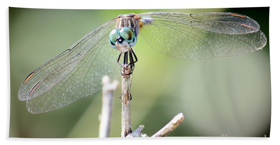 Macro Hand Towel featuring the photograph Welcome To My World Dragonfly by Carol Groenen