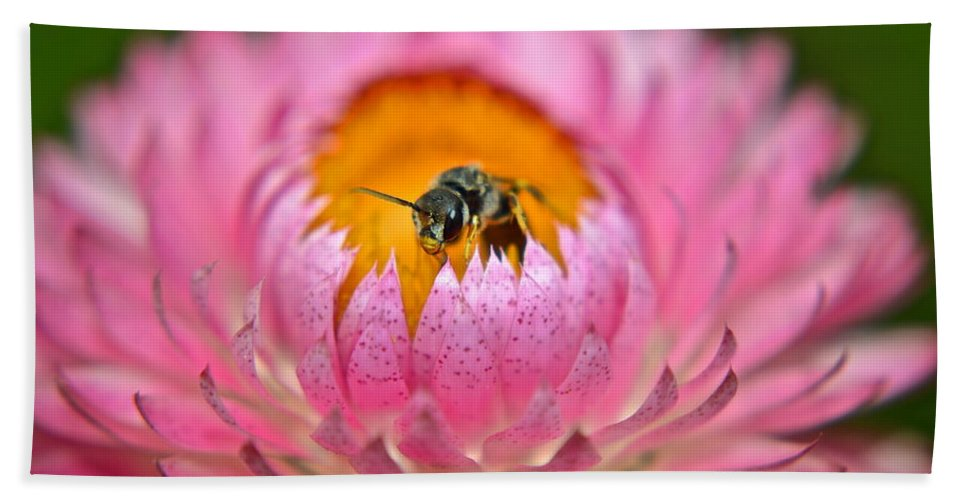 Bee Bath Sheet featuring the photograph Well Hello There by Frozen in Time Fine Art Photography