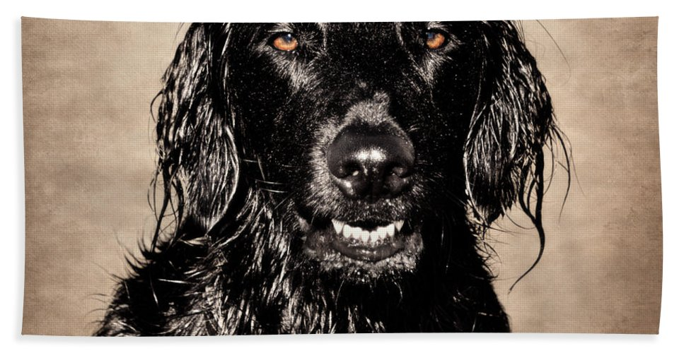 Dog Bath Sheet featuring the photograph Well You Did Ask For My Best Portrait Smile by Susie Peek