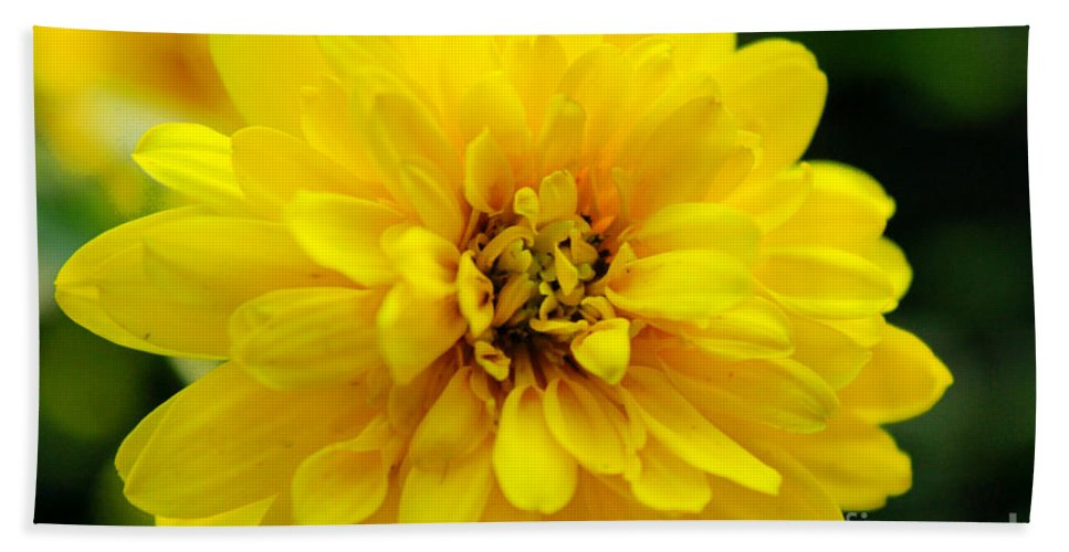 Yellow Marigold Hand Towel featuring the photograph West Virginia Marigold by Melissa Petrey