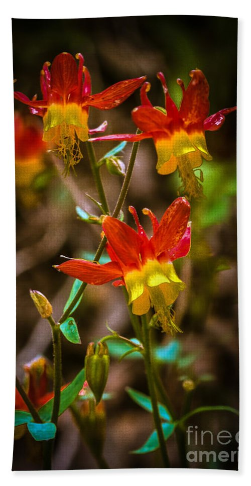 Red Hand Towel featuring the photograph Western Columbine by Robert Bales