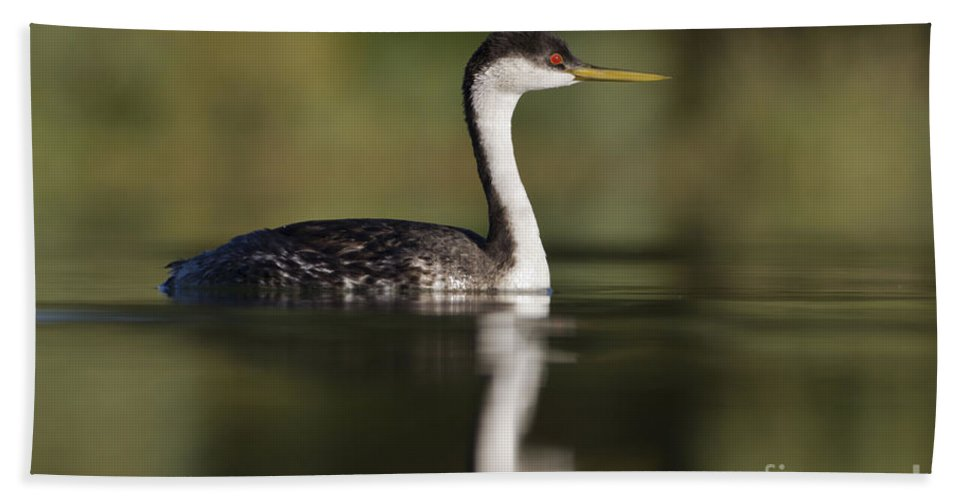 Western Grebe Bath Sheet featuring the photograph Western Grebe by Bryan Keil