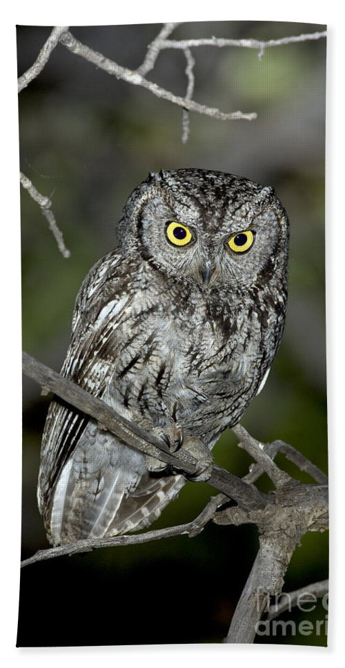 Western Screech Owl Hand Towel featuring the photograph Western Screech Owl by Anthony Mercieca