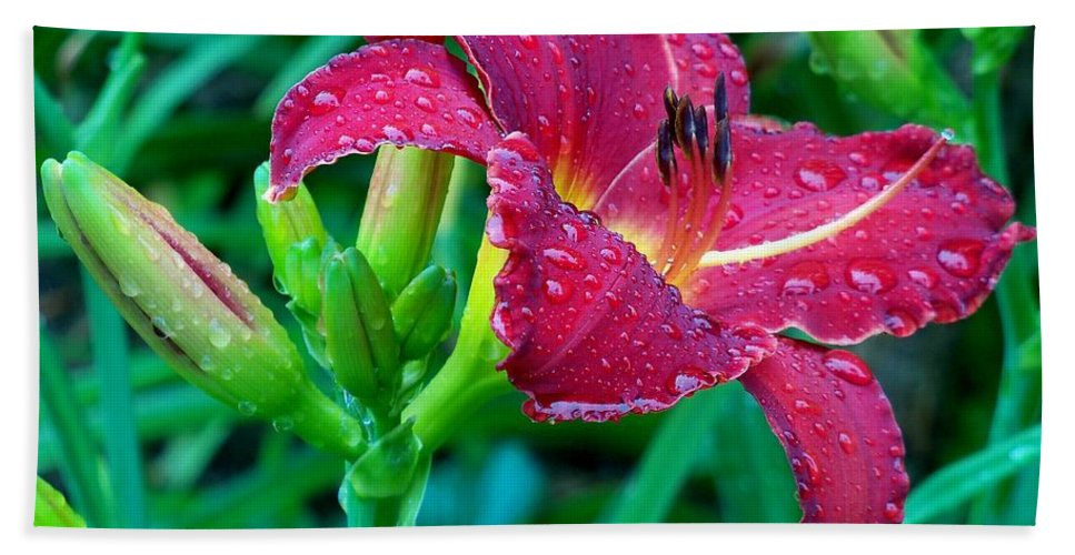Garden Bath Sheet featuring the photograph Wet Red Razzmatazz Daylily 2 by Lynne Miller