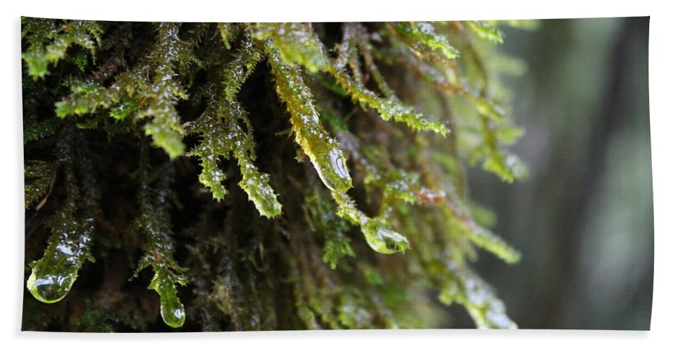 California Bath Sheet featuring the photograph Wet Redwood Branches by Nicholas Miller
