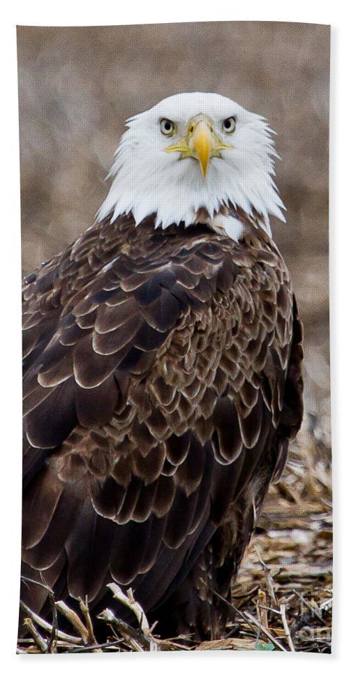 Eagle Hand Towel featuring the photograph What by Jan Killian
