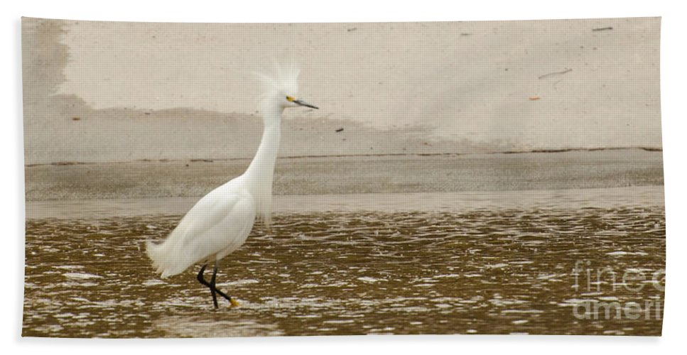 Bird Bath Sheet featuring the photograph What Was That I Step On by Donna Brown