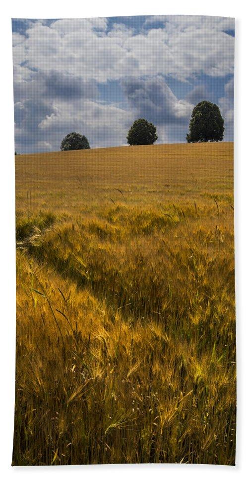 Switzerland Hand Towel featuring the photograph Wheat Fields by Debra and Dave Vanderlaan