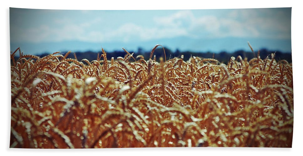 Wheat Bath Sheet featuring the photograph Wheat Reeds by Holly Blunkall